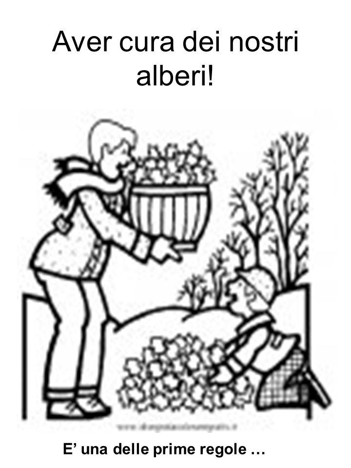 Aver cura dei nostri alberi! E una delle prime regole …