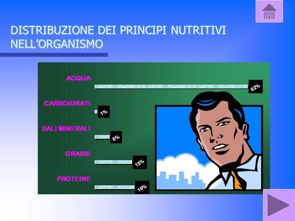 DISTRIBUZIONE DEI PRINCIPI NUTRITIVI NELLORGANISMO