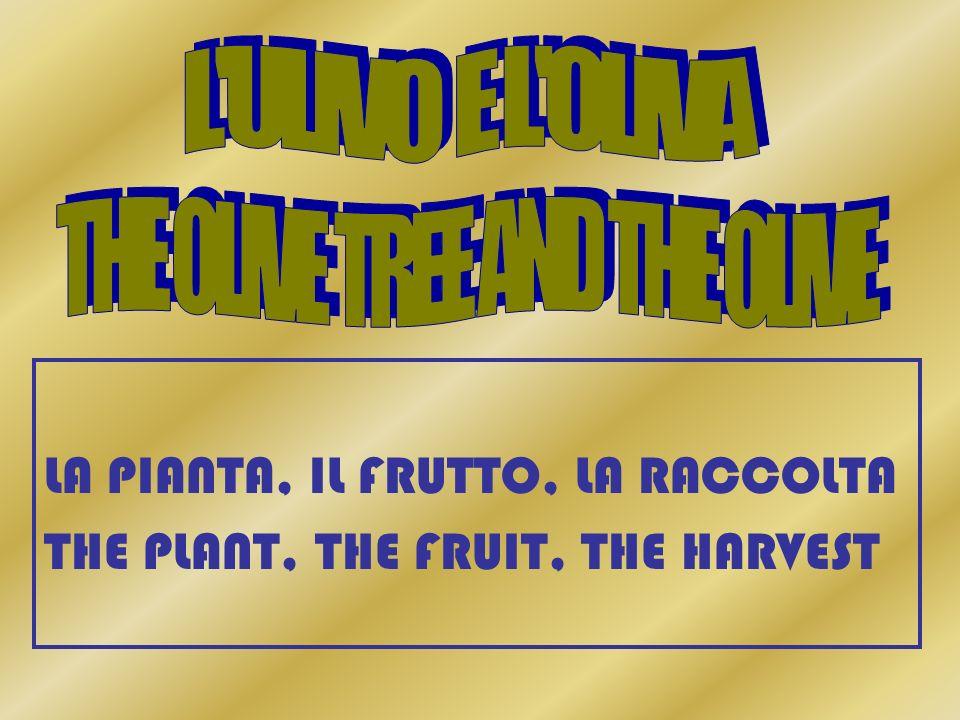 LA PIANTA, IL FRUTTO, LA RACCOLTA THE PLANT, THE FRUIT, THE HARVEST