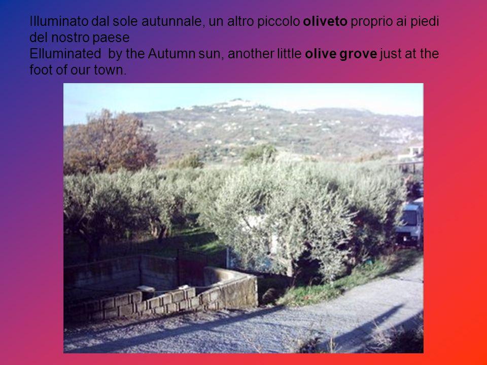 Illuminato dal sole autunnale, un altro piccolo oliveto proprio ai piedi del nostro paese Elluminated by the Autumn sun, another little olive grove just at the foot of our town.