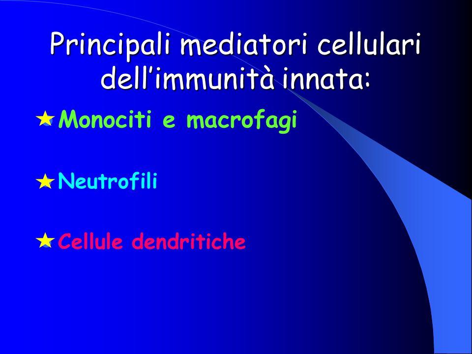 Principali mediatori cellulari dellimmunità innata: Monociti e macrofagi Neutrofili Cellule dendritiche