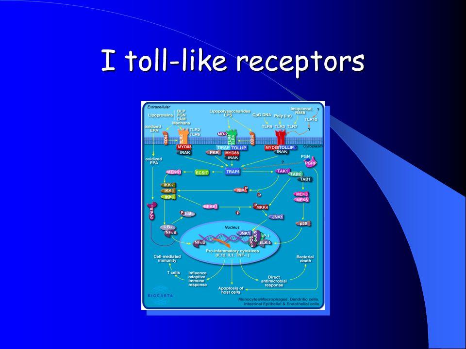 I toll-like receptors