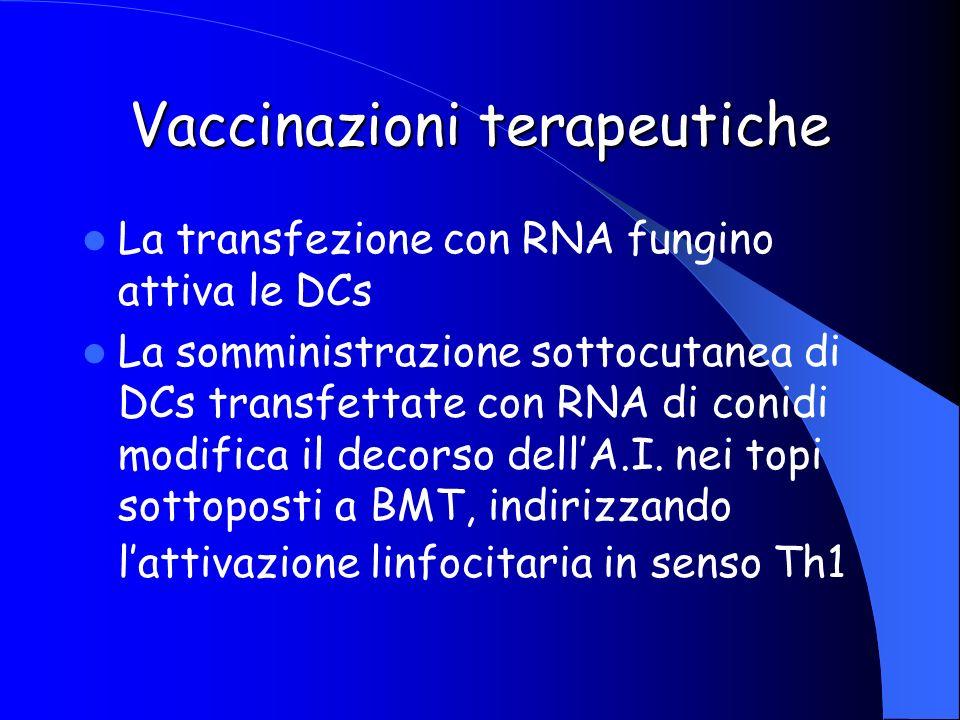 Vaccinazioni terapeutiche La transfezione con RNA fungino attiva le DCs La somministrazione sottocutanea di DCs transfettate con RNA di conidi modific