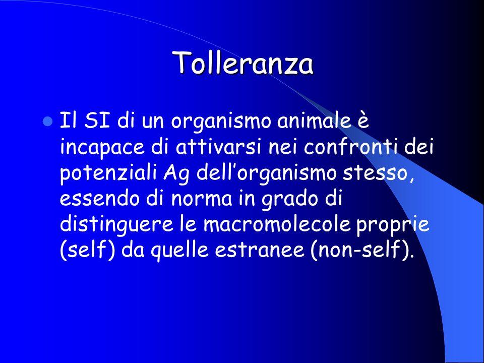 Tolleranza Il SI di un organismo animale è incapace di attivarsi nei confronti dei potenziali Ag dellorganismo stesso, essendo di norma in grado di di
