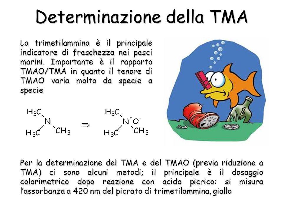 La trimetilammina è il principale indicatore di freschezza nei pesci marini.