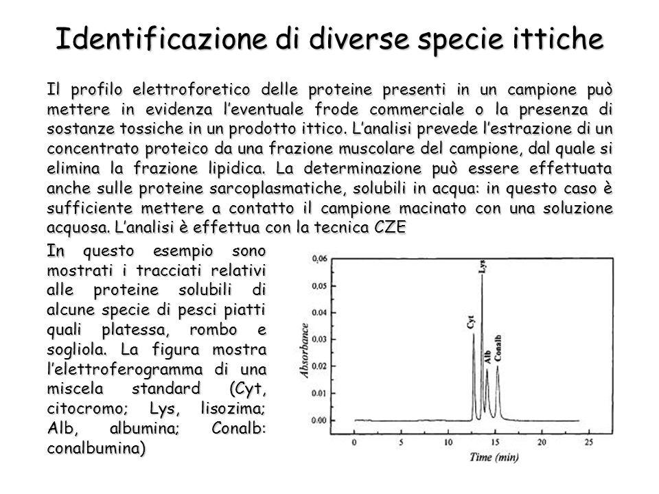 Il profilo elettroforetico delle proteine presenti in un campione può mettere in evidenza leventuale frode commerciale o la presenza di sostanze tossiche in un prodotto ittico.