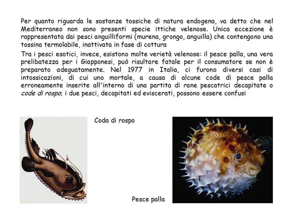 Per quanto riguarda le sostanze tossiche di natura endogena, va detto che nel Mediterraneo non sono presenti specie ittiche velenose.