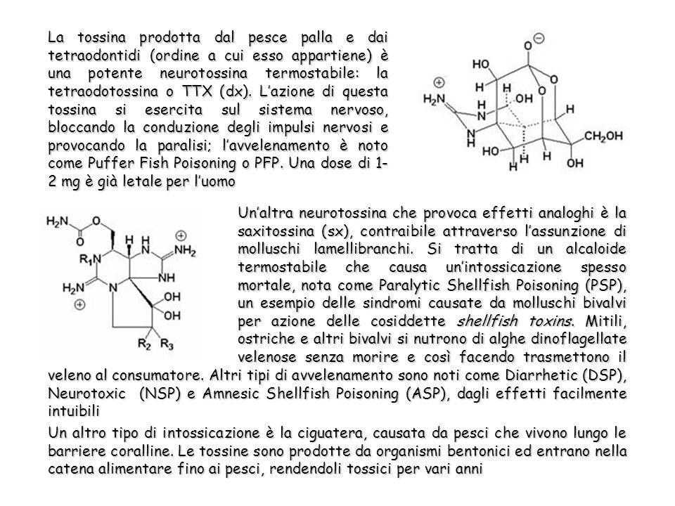 La tossina prodotta dal pesce palla e dai tetraodontidi (ordine a cui esso appartiene) è una potente neurotossina termostabile: la tetraodotossina o TTX (dx).