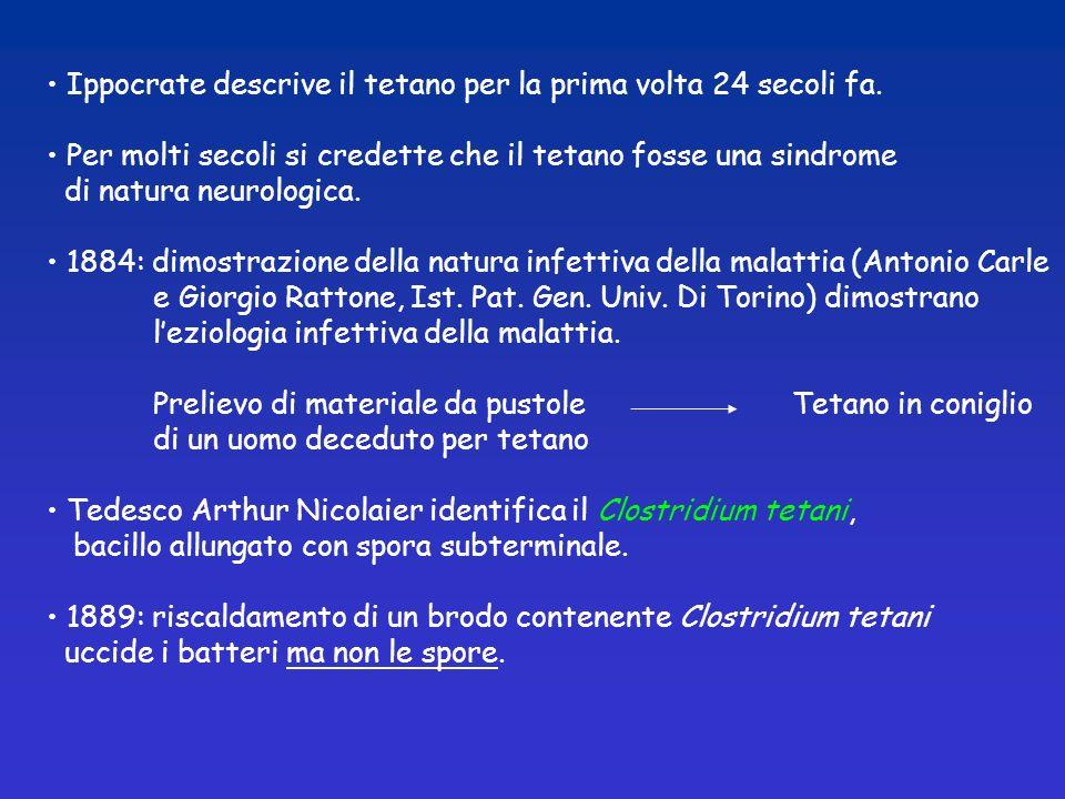 Ippocrate descrive il tetano per la prima volta 24 secoli fa. Per molti secoli si credette che il tetano fosse una sindrome di natura neurologica. 188