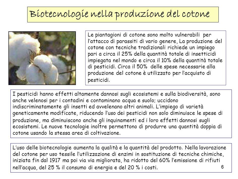 6 Biotecnologie nella produzione del cotone Le piantagioni di cotone sono molto vulnerabili per lattacco di parassiti di vario genere, La produzione d