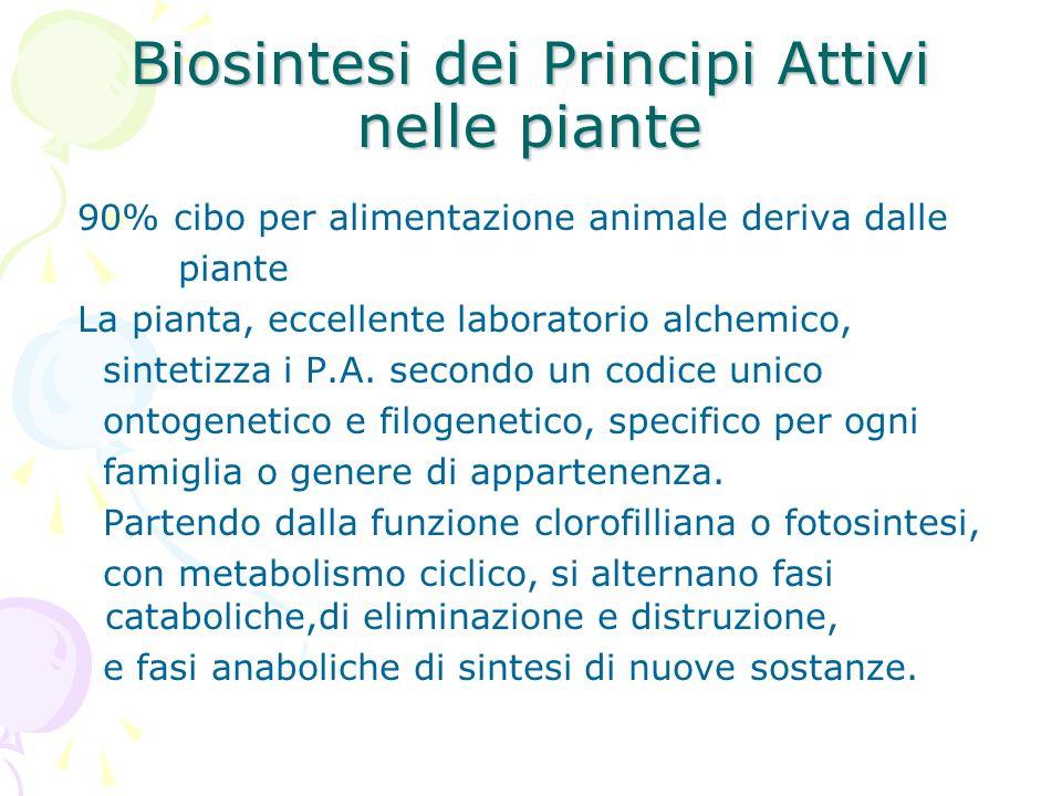 Biosintesi dei Principi Attivi nelle piante 90% cibo per alimentazione animale deriva dalle piante La pianta, eccellente laboratorio alchemico, sintet