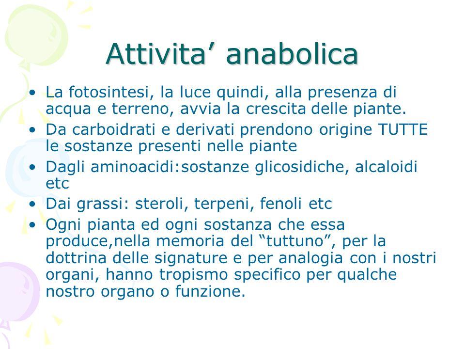 Attivita anabolica La fotosintesi, la luce quindi, alla presenza di acqua e terreno, avvia la crescita delle piante. Da carboidrati e derivati prendon