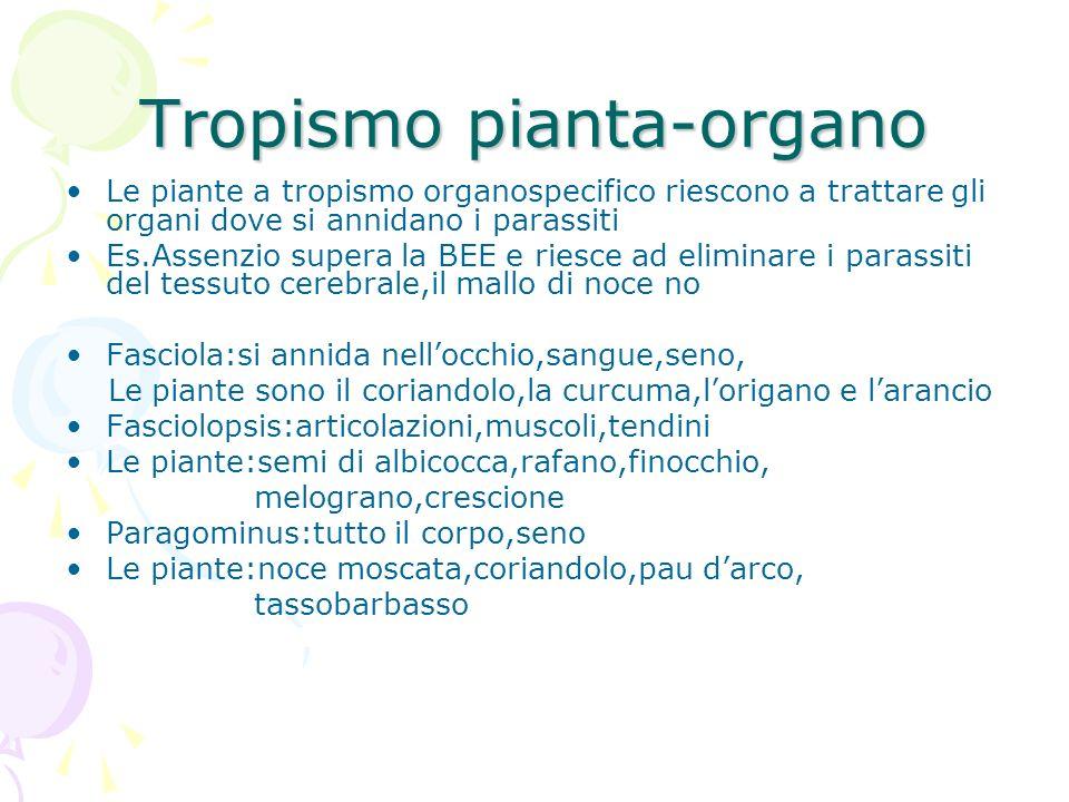 Tropismo pianta-organo Le piante a tropismo organospecifico riescono a trattare gli organi dove si annidano i parassiti Es.Assenzio supera la BEE e ri