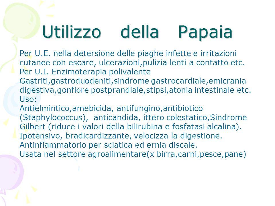 Utilizzo della Papaia Per U.E. nella detersione delle piaghe infette e irritazioni cutanee con escare, ulcerazioni,pulizia lenti a contatto etc. Per U