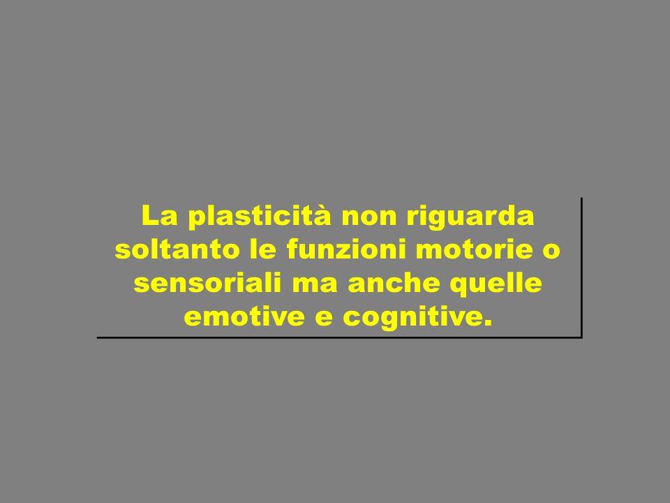 La plasticità non riguarda soltanto le funzioni motorie o sensoriali ma anche quelle emotive e cognitive.