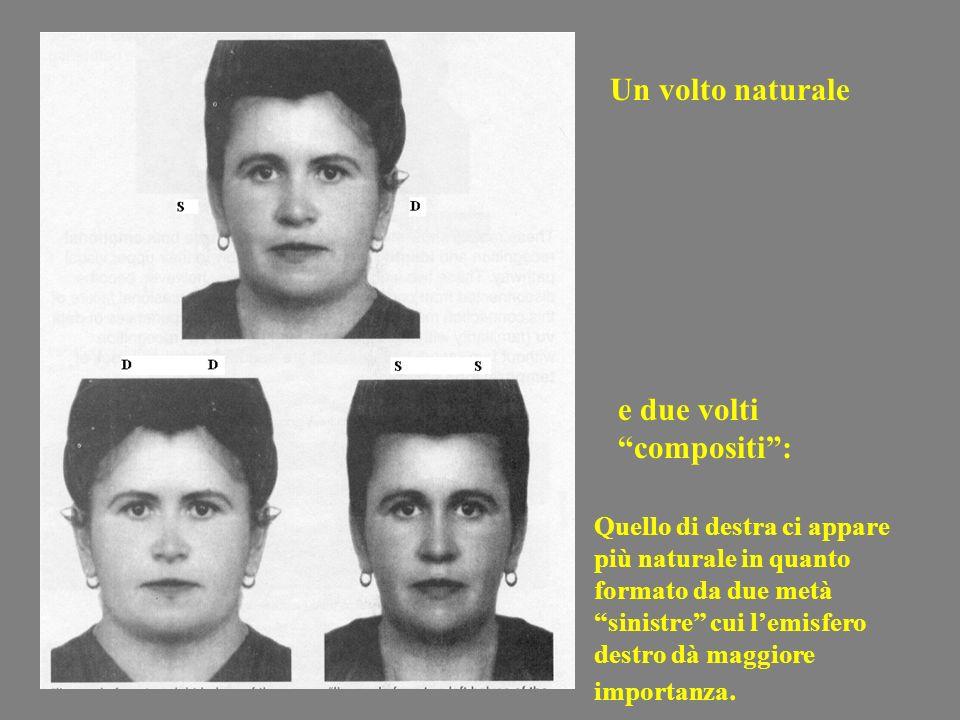 Un volto naturale e due volti compositi: Quello di destra ci appare più naturale in quanto formato da due metà sinistre cui lemisfero destro dà maggio