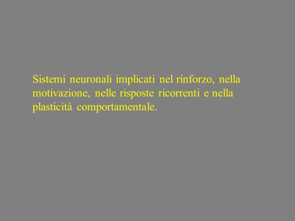 Sistemi neuronali implicati nel rinforzo, nella motivazione, nelle risposte ricorrenti e nella plasticità comportamentale.
