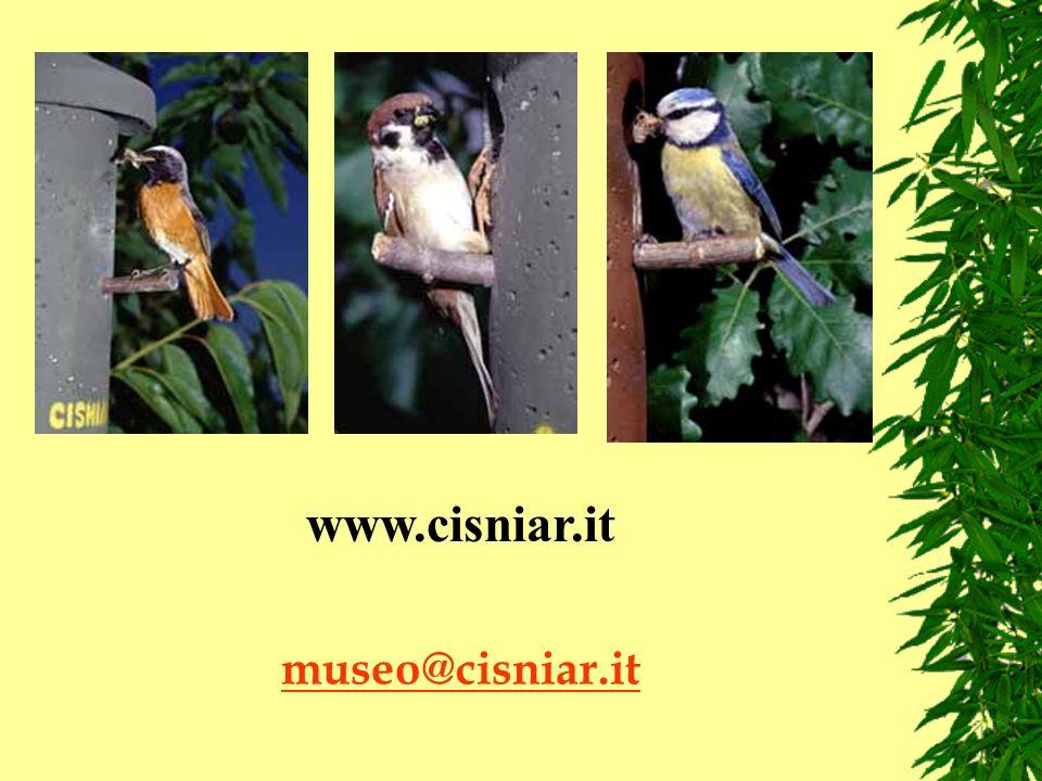 museo@cisniar.it www.cisniar.it