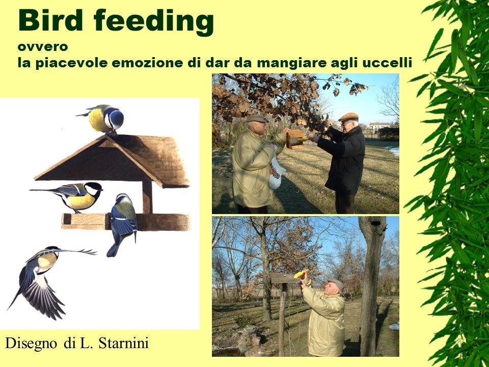 Bird feeding ovvero la piacevole emozione di dar da mangiare agli uccelli Disegno di L. Starnini