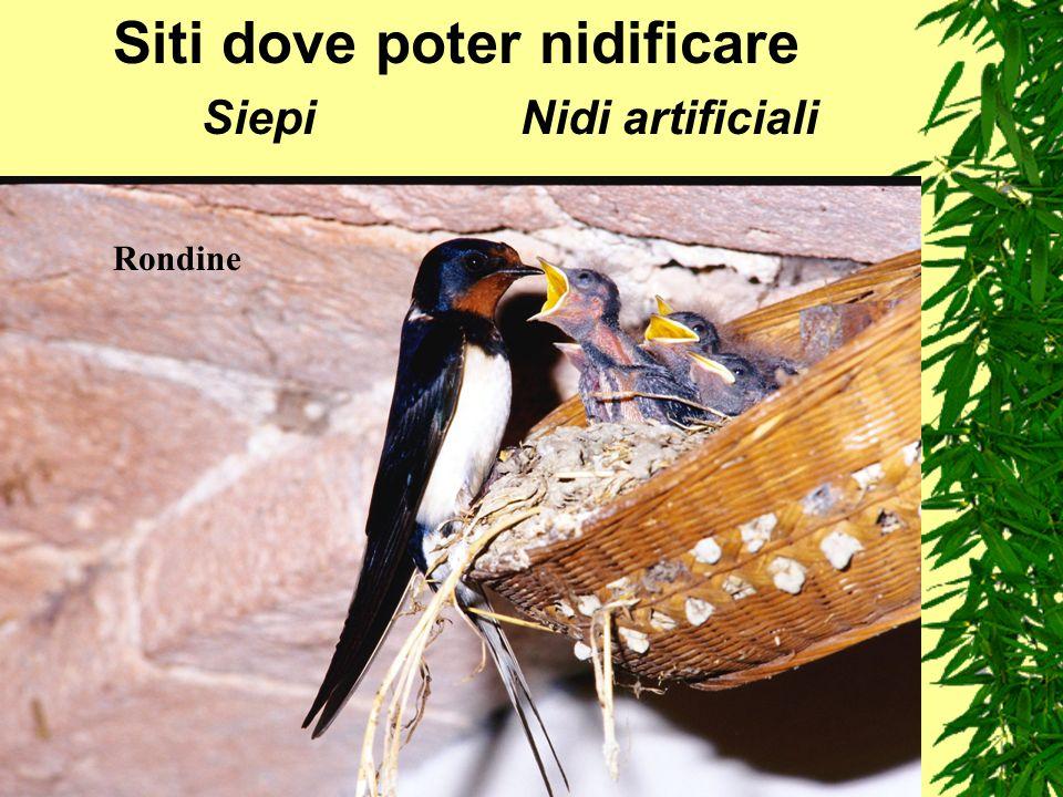 Siti dove poter nidificare SiepiNidi artificiali Rondine