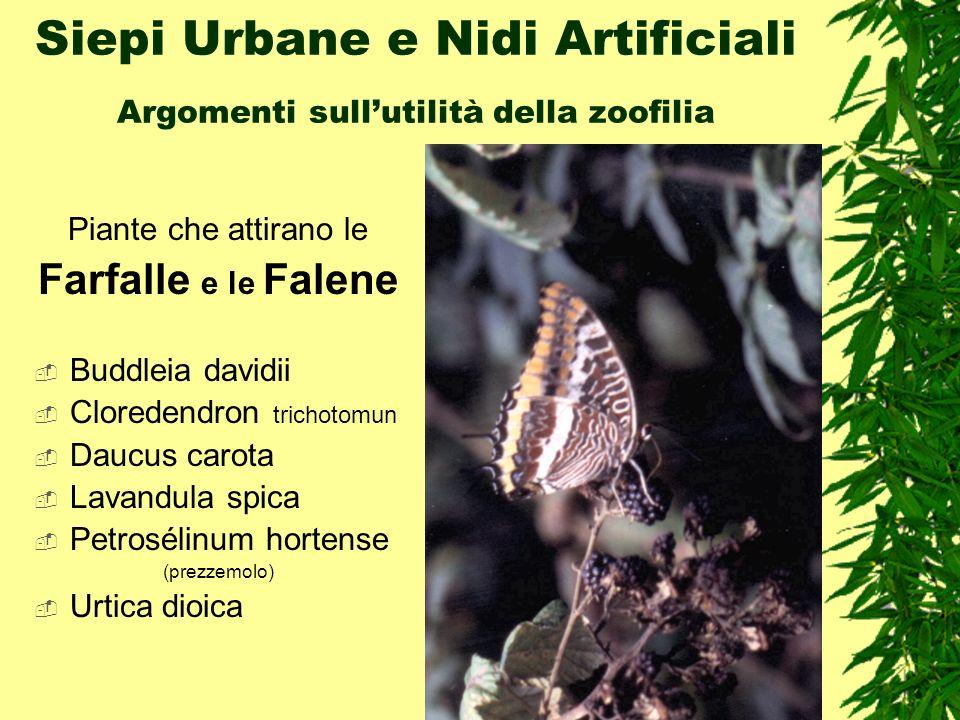 Siepi Urbane e Nidi Artificiali Argomenti sullutilità della zoofilia Piante che attirano le Farfalle e le Falene Buddleia davidii Cloredendron trichot