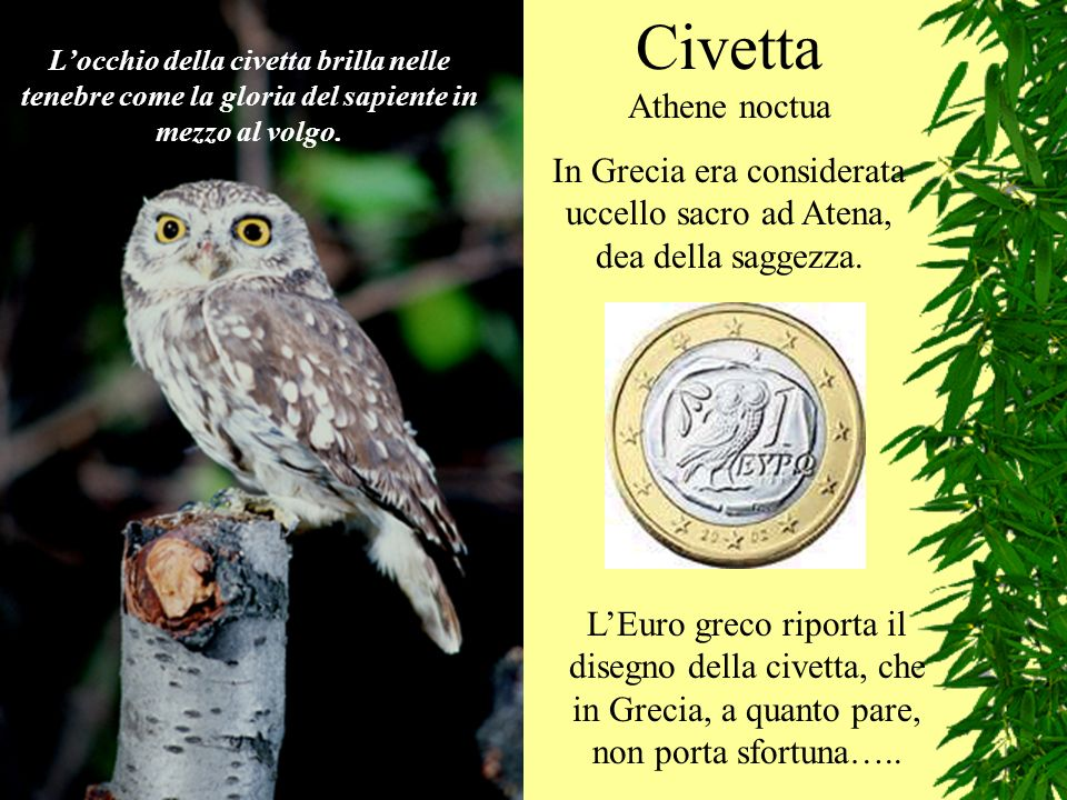 Civetta Athene noctua In Grecia era considerata uccello sacro ad Atena, dea della saggezza. LEuro greco riporta il disegno della civetta, che in Greci