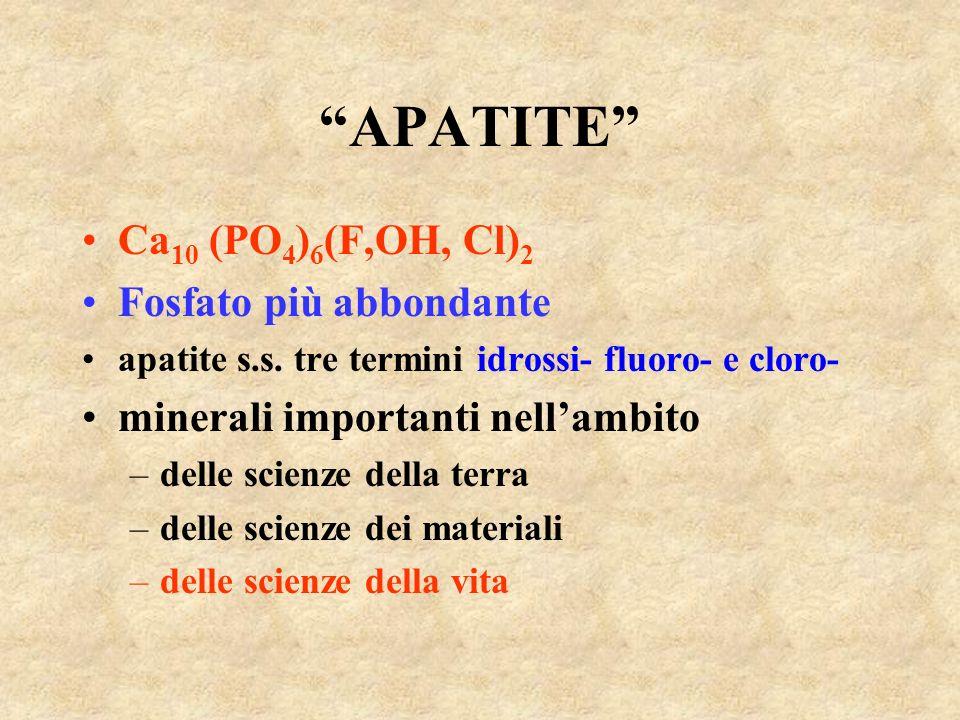 APATITE Ca 10 (PO 4 ) 6 (F,OH, Cl) 2 Fosfato più abbondante apatite s.s. tre termini idrossi- fluoro- e cloro- minerali importanti nellambito –delle s