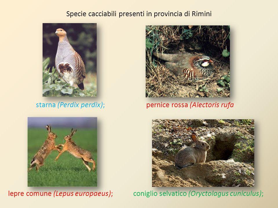 starna (Perdix perdix); pernice rossa (Alectoris rufa lepre comune (Lepus europaeus); coniglio selvatico (Oryctolagus cuniculus);