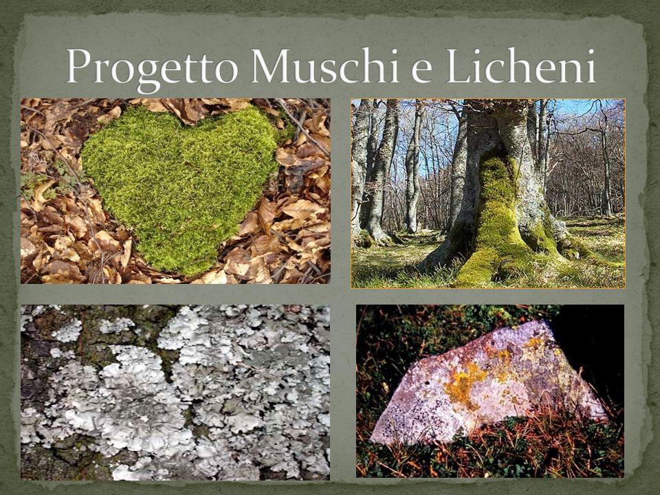 Questo progetto-laboratorio ha lo scopo di proclamare il 2010 Anno della biodiversità.