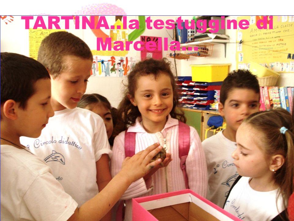 TARTINA..la testuggine di Marcella…