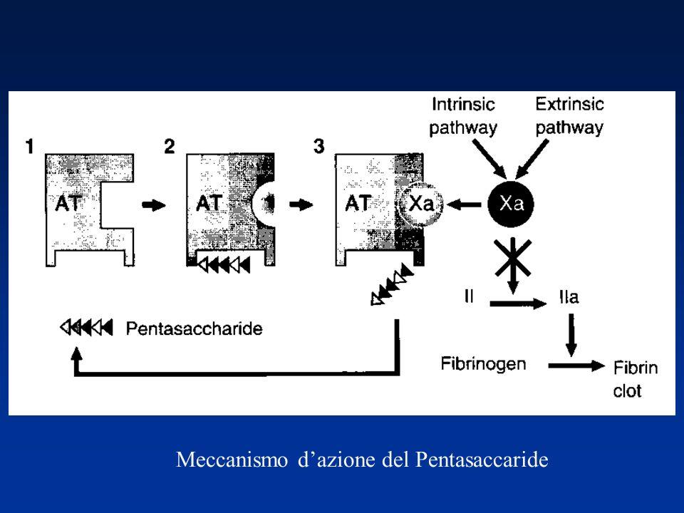 Meccanismo dazione del Pentasaccaride