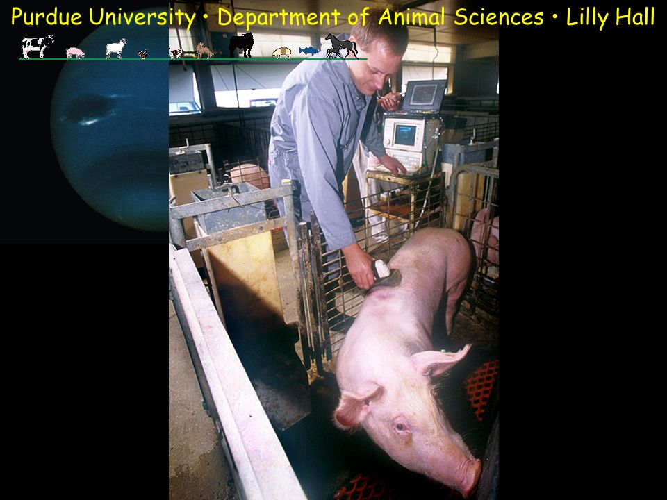 Purdue University Department of Animal Sciences Lilly Hall