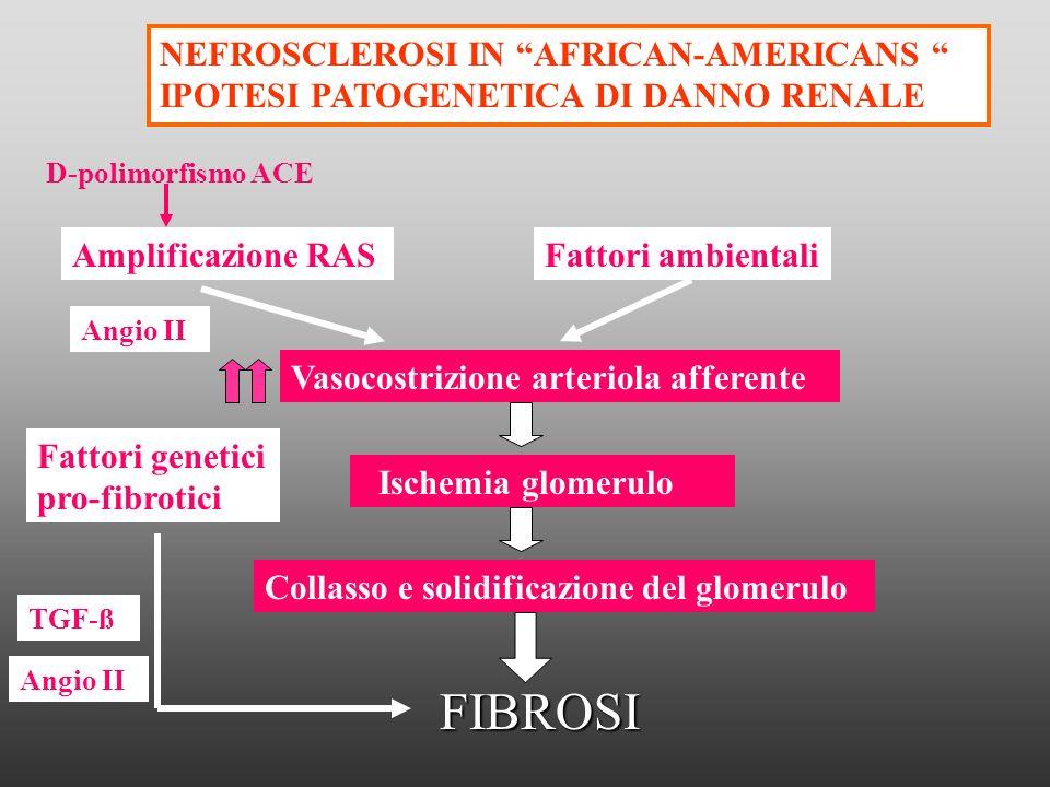 Vasocostrizione arteriola afferente Ischemia glomerulo Collasso e solidificazione del glomerulo FIBROSI NEFROSCLEROSI IN AFRICAN-AMERICANS IPOTESI PAT
