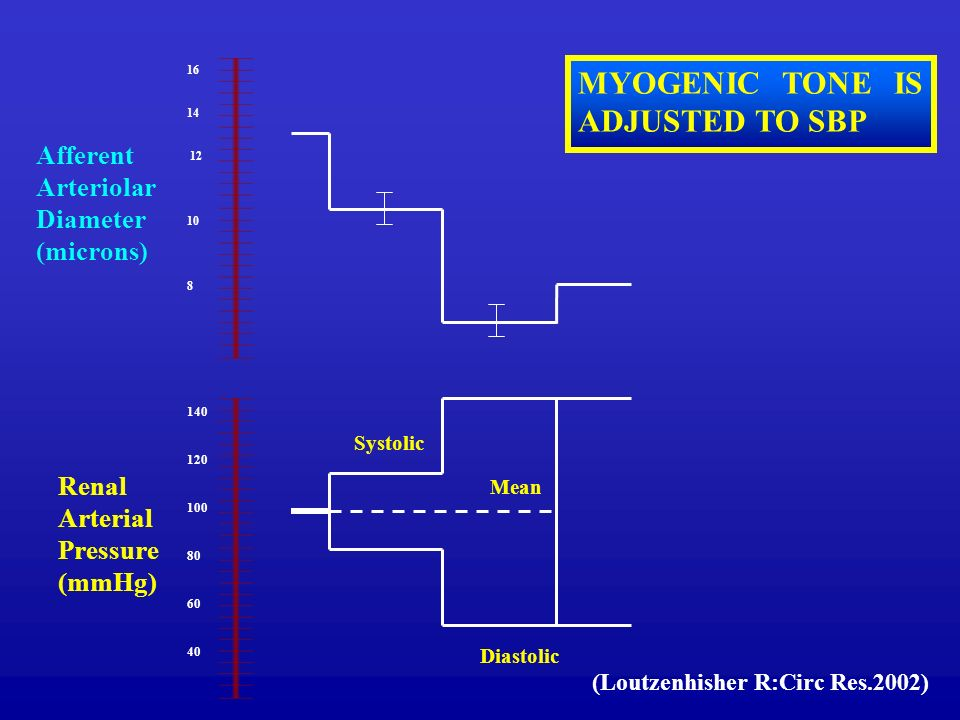 16 14 12 10 8 140 120 100 80 60 40 Diastolic Mean Systolic Renal Arterial Pressure (mmHg) Afferent Arteriolar Diameter (microns) MYOGENIC TONE IS ADJUSTED TO SBP (Loutzenhisher R:Circ Res.2002)