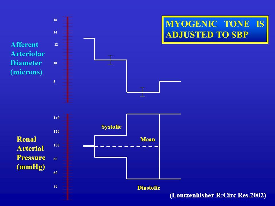 16 14 12 10 8 140 120 100 80 60 40 Diastolic Mean Systolic Renal Arterial Pressure (mmHg) Afferent Arteriolar Diameter (microns) MYOGENIC TONE IS ADJU
