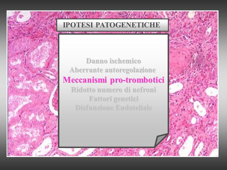 IPOTESI PATOGENETICHE Danno ischemico Aberrante autoregolazione Meccanismi pro-trombotici Ridotto numero di nefroni Fattori genetici Disfunzione Endot