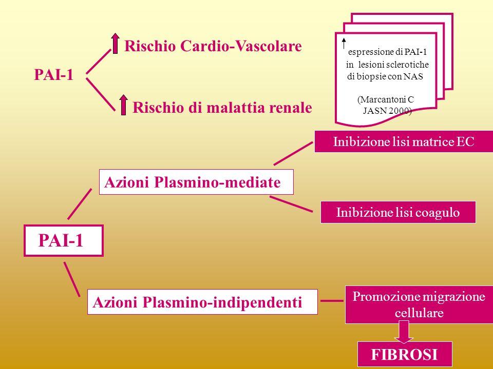 PAI-1 Rischio Cardio-Vascolare Rischio di malattia renale PAI-1 Azioni Plasmino-mediate Inibizione lisi matrice EC Inibizione lisi coagulo Azioni Plas