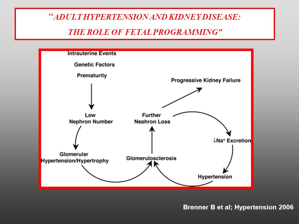 Brenner B et al; Hypertension 2006 ADULT HYPERTENSION AND KIDNEY DISEASE: THE ROLE OF FETAL PROGRAMMING