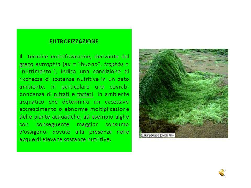 EUTROFIZZAZIONE Il termine eutrofizzazione, derivante dal greco eutrophia (eu =