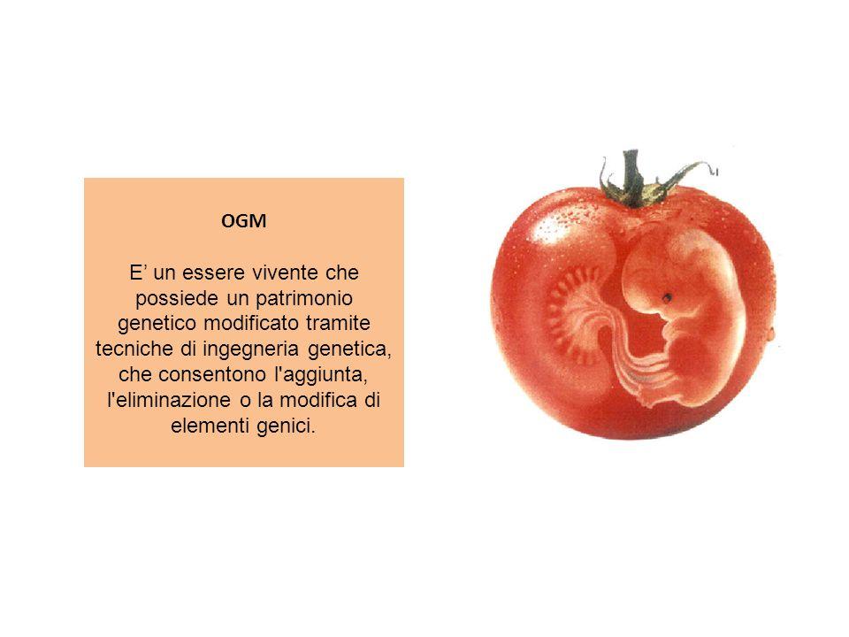 OGM E un essere vivente che possiede un patrimonio genetico modificato tramite tecniche di ingegneria genetica, che consentono l'aggiunta, l'eliminazi