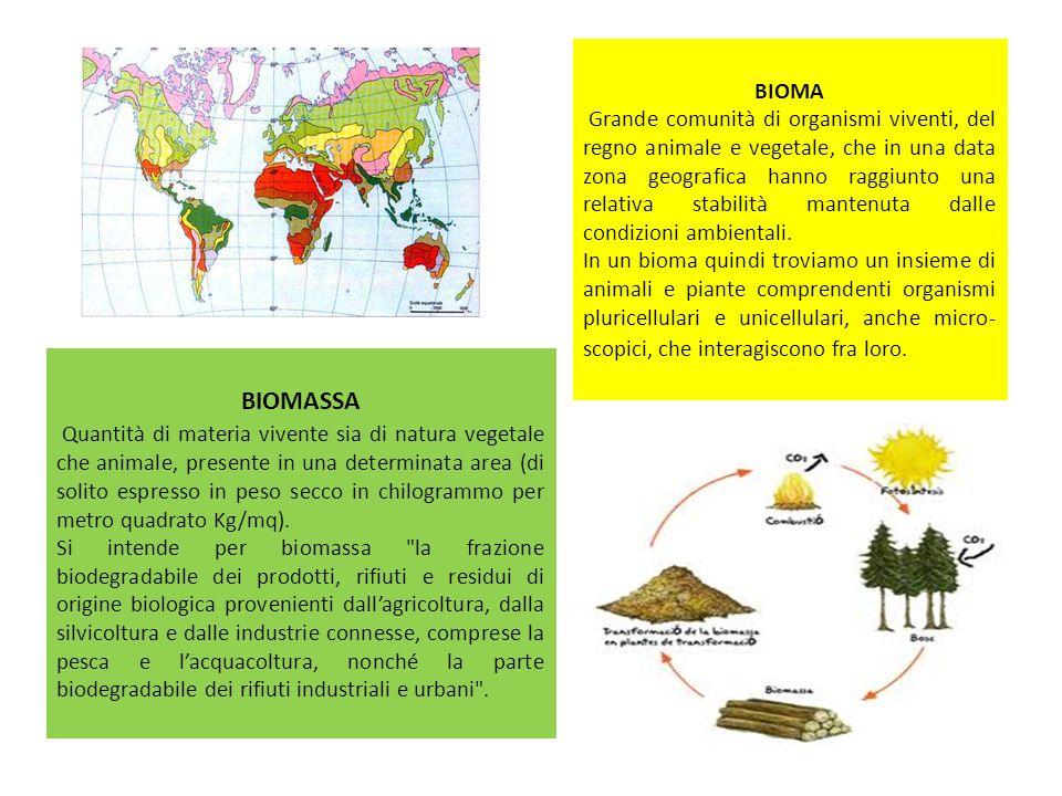 BIOMA Grande comunità di organismi viventi, del regno animale e vegetale, che in una data zona geografica hanno raggiunto una relativa stabilità mante
