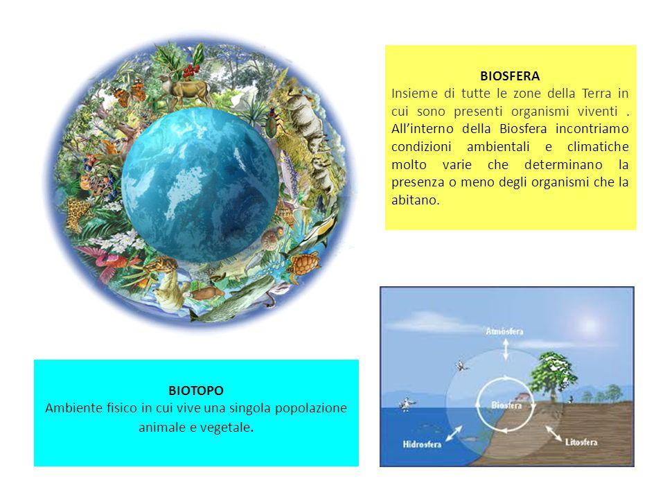 BIOSFERA Insieme di tutte le zone della Terra in cui sono presenti organismi viventi. Allinterno della Biosfera incontriamo condizioni ambientali e cl
