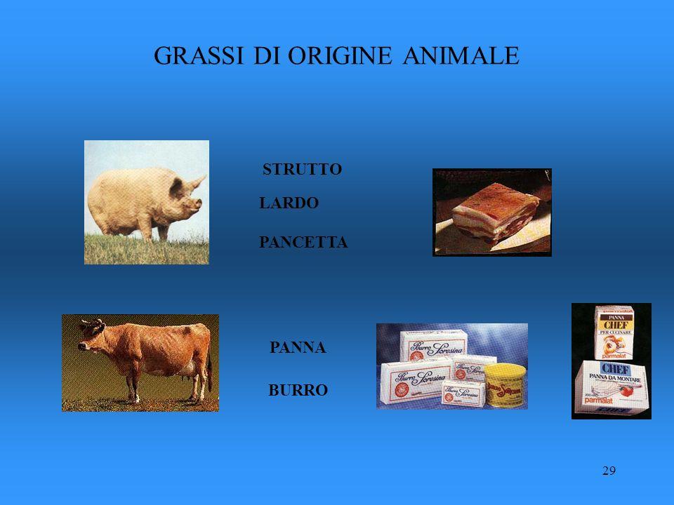 29 STRUTTO LARDO BURRO PANCETTA PANNA GRASSI DI ORIGINE ANIMALE