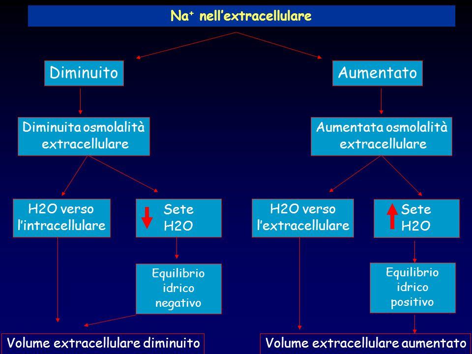 Na + nellextracellulare DiminuitoAumentato Diminuita osmolalità extracellulare Aumentata osmolalità extracellulare H2O verso lintracellulare Sete H2O