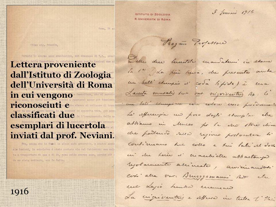 1916 Lettera del Prof. Antonio Neviani nella quale si lamenta del pessimo stato in cui è stato restituito lo scheletro del Gabinetto di scienze presta