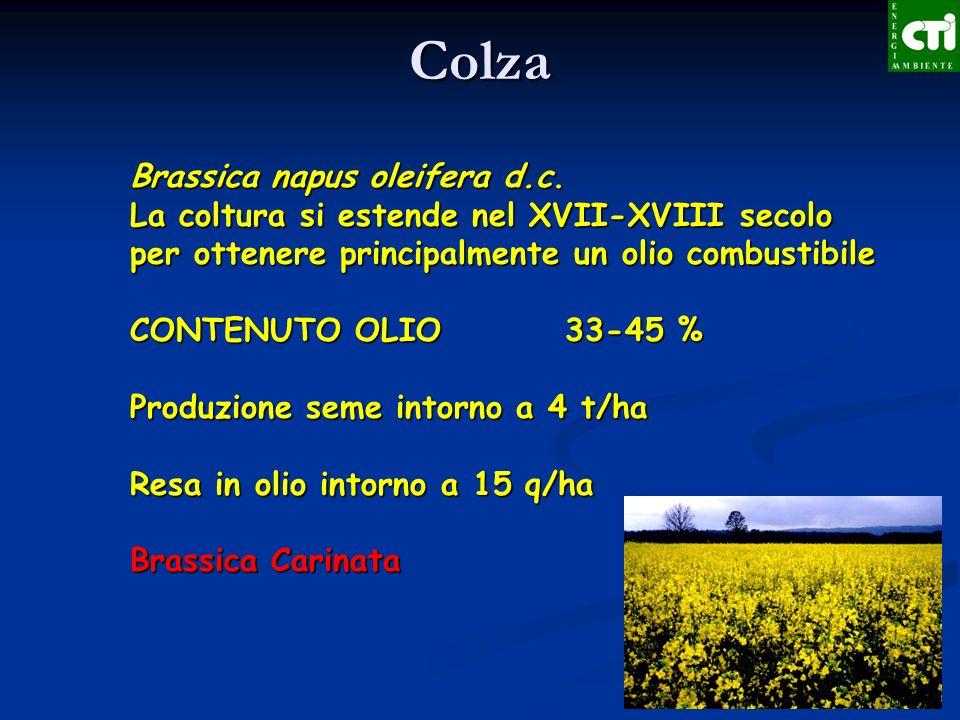 Brassica napus oleifera d.c. La coltura si estende nel XVII-XVIII secolo per ottenere principalmente un olio combustibile CONTENUTO OLIO 33-45 % Produ