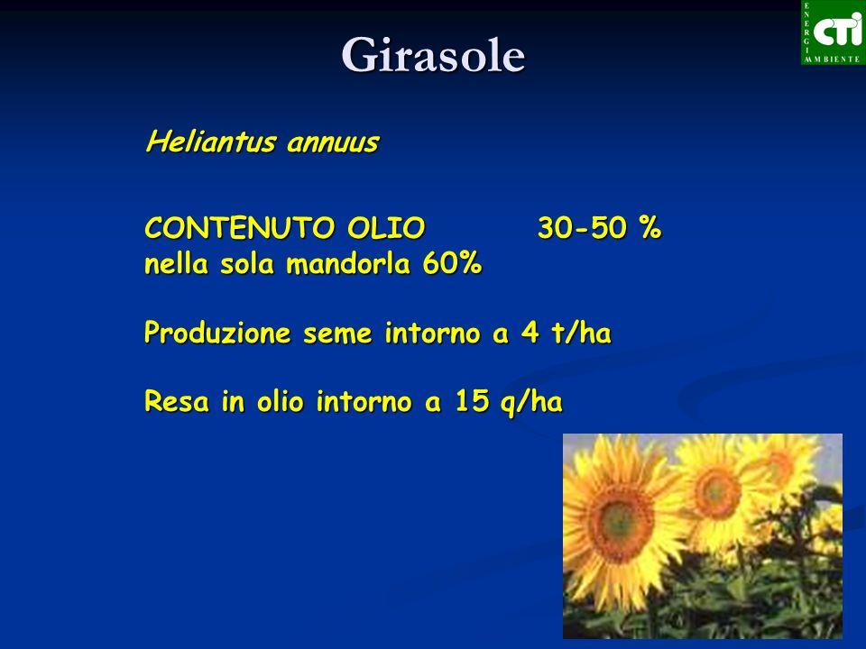 Heliantus annuus CONTENUTO OLIO 30-50 % nella sola mandorla 60% Produzione seme intorno a 4 t/ha Resa in olio intorno a 15 q/ha Girasole