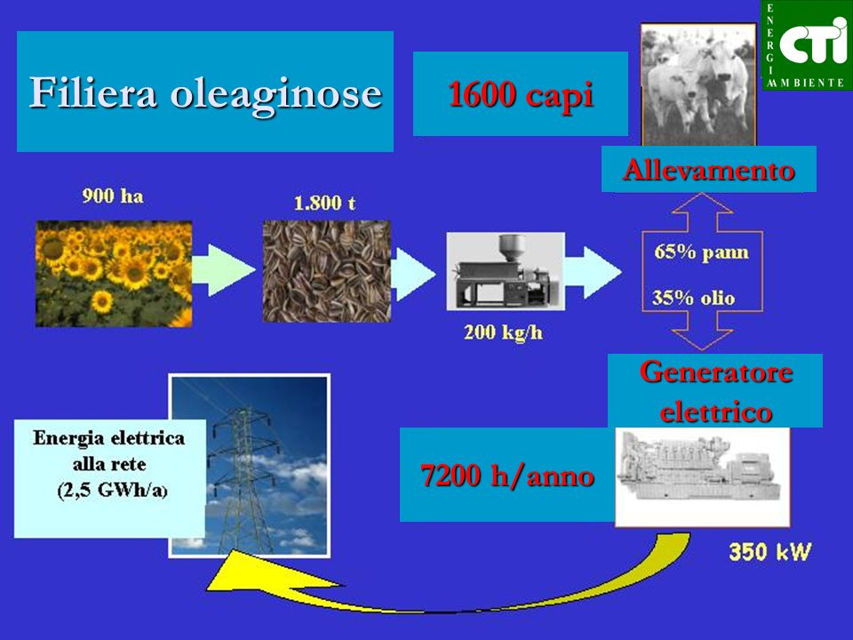 Filiera oleaginose 1600 capi Allevamento Generatore elettrico 7200 h/anno