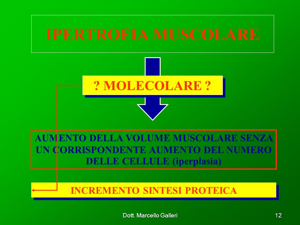 Dott. Marcello Galleri12 IPERTROFIA MUSCOLARE AUMENTO DELLA VOLUME MUSCOLARE SENZA UN CORRISPONDENTE AUMENTO DEL NUMERO DELLE CELLULE (iperplasia) ? M