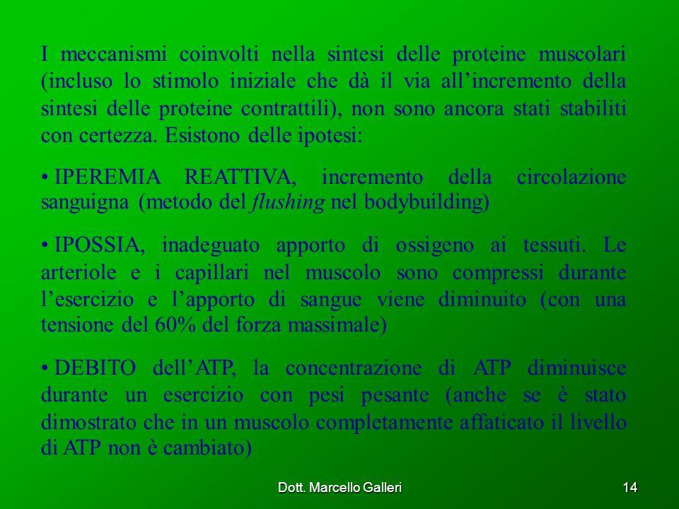Dott. Marcello Galleri14 I meccanismi coinvolti nella sintesi delle proteine muscolari (incluso lo stimolo iniziale che dà il via allincremento della